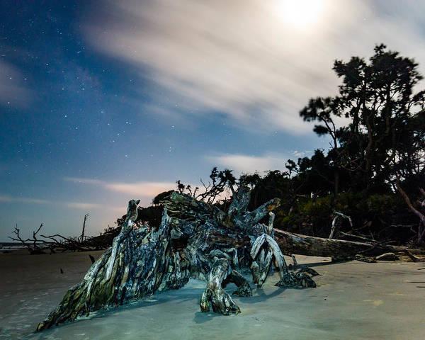 Photograph - Driftwood Beast by Chris Bordeleau