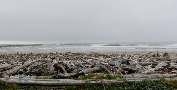 Photograph - Driftwood  by Christy Pooschke