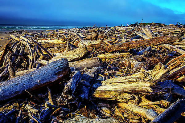 Rot Photograph - Driftwood Coastline by Garry Gay