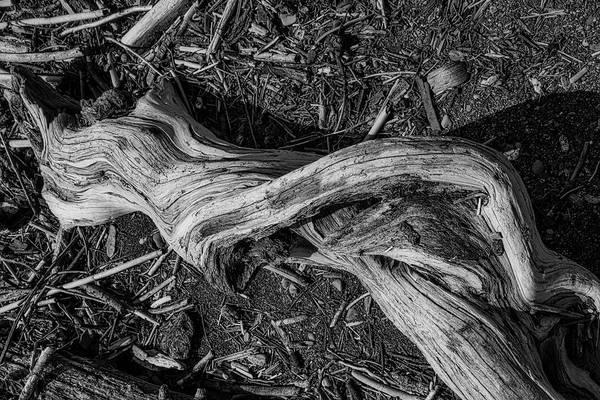 Wall Art - Photograph - Driftwood Dancer by Garry Gay