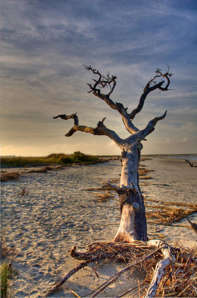 Wall Art - Photograph - Driftwood  by Drew Castelhano