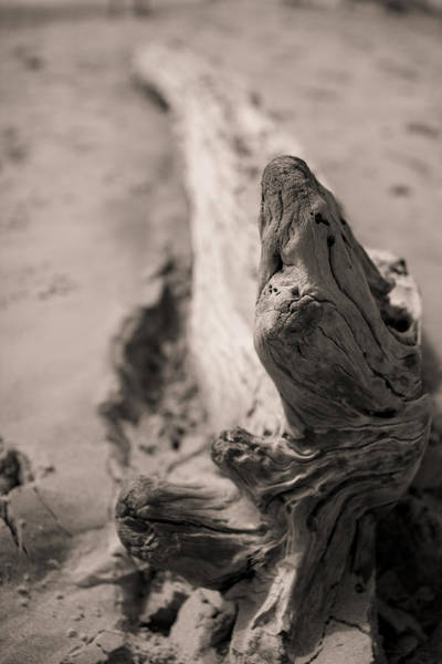Driftwood Photograph - Driftwood by Dustin K Ryan