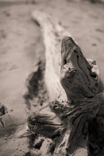 Photograph - Driftwood by Dustin K Ryan