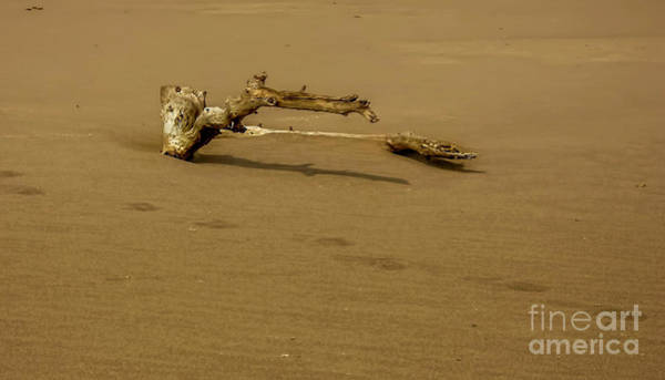 Wall Art - Photograph - Driftwood by Elijah Knight