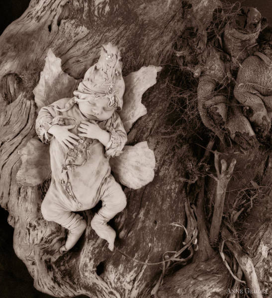 Sepia Photograph - Driftwood Fairy by Anne Geddes