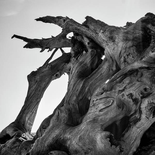 Photograph - Driftwood I Sq Bw by David Gordon