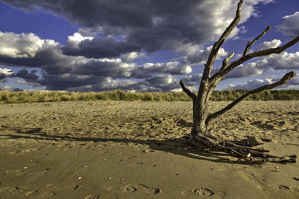Photograph - Driftwood II by Pete Federico