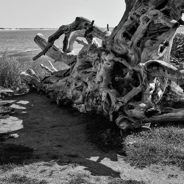 Photograph - Driftwood II Sq Bw by David Gordon