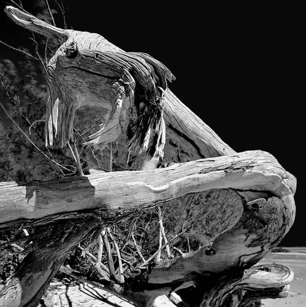 Photograph - Driftwood by Jeremy Lavender Photography