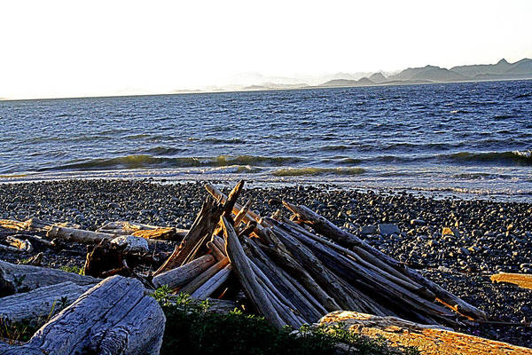 Digital Art - Driftwood - Kitty Coleman Provincial Park - Bc by Joseph Coulombe