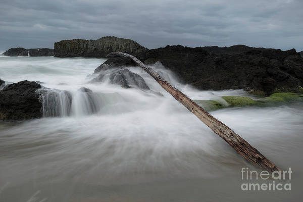 Wall Art - Photograph - Driftwood Leaning Against The Rock by Masako Metz