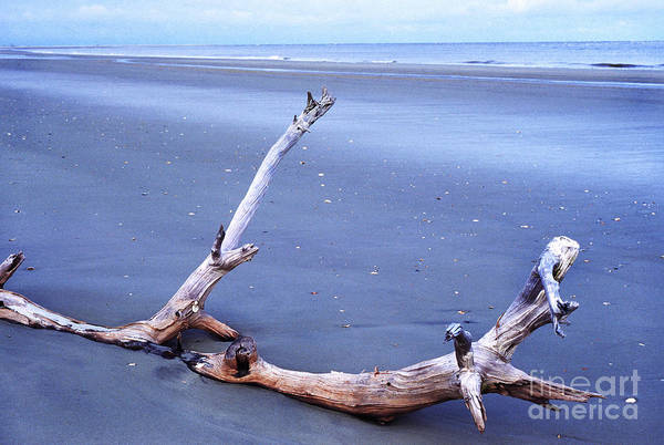 Photograph - Driftwood Little St Simons Island by Thomas R Fletcher