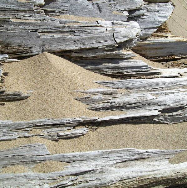 Photograph - Driftwood by Michelle Calkins