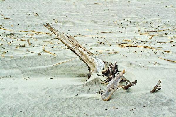 Photograph - Driftwood On Beach by Bill Barber