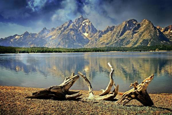 Photograph - Driftwood On Jackson Lake by Marty Koch