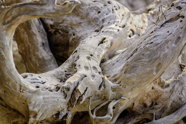 Photograph - Driftwood On The Beach by Robert Mitchell