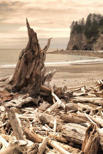Photograph - Driftwood On The Coast Of Washington by Dan Sproul