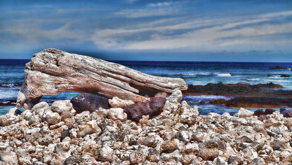 Mixed Media - Driftwood by Pamela Walton