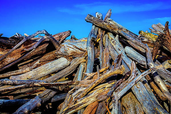 Rot Photograph - Driftwood Pile Up by Garry Gay