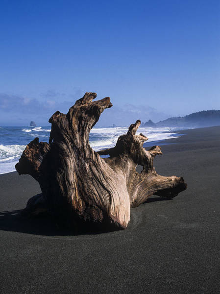 Photograph - Driftwood by Robert Potts