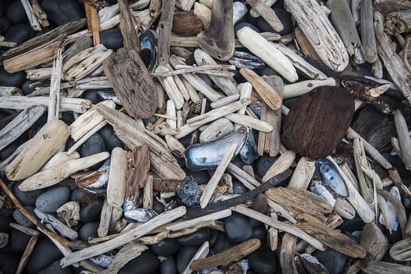 Photograph - Driftwood Shells Stones by Robert Potts