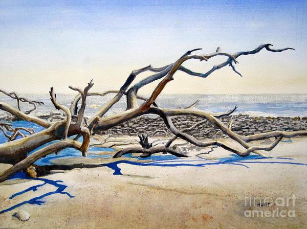 Jekyll Island Painting - Driftwood by Shirley Braithwaite Hunt