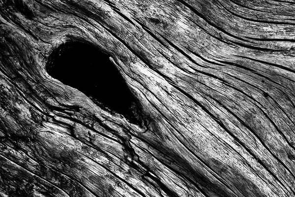 Knot Hole Photograph - Driftwood by Stuart Litoff
