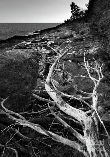Photograph - Driftwood Tree, La Verna Preserve, Bristol, Maine  -20999-30003 by John Bald