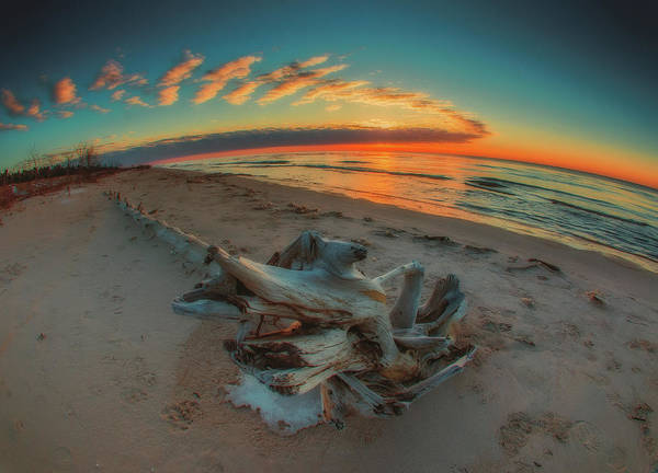 Photograph - Driftwood1 by David Heilman