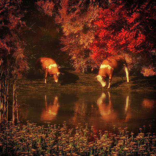 Digital Art - Drinking Cows In The Forest by Jan Keteleer