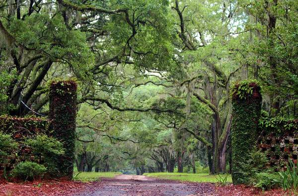 Photograph - Driveway To The Past by Cynthia Guinn