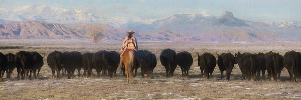 Photograph - Driving The Herd by Pamela Steege