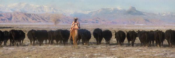 Wall Art - Photograph - Driving The Herd by Pamela Steege