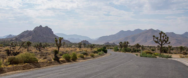 Photograph - Driving Through Joshua Tree National Park by Ross G Strachan
