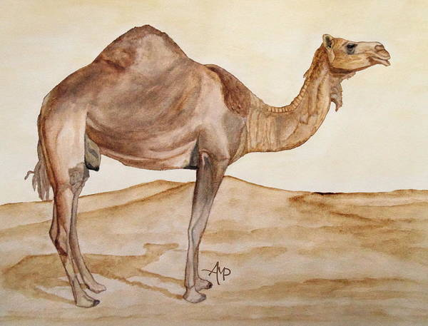 Painting - Dromedary Watercolor by Angeles M Pomata