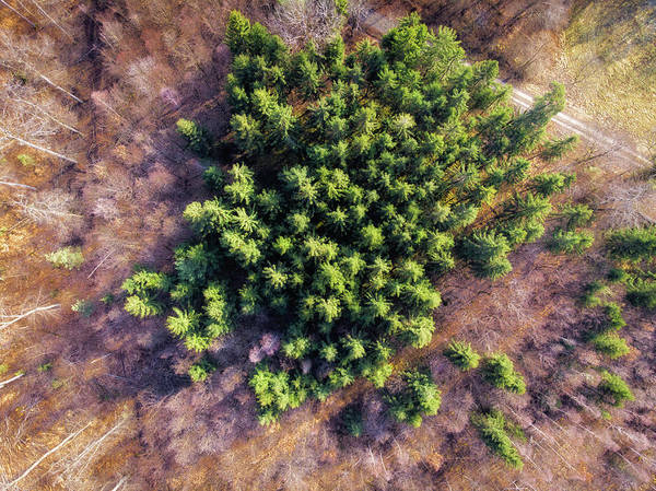 Photograph - Drone Photography Trees In Forest From Above by Matthias Hauser