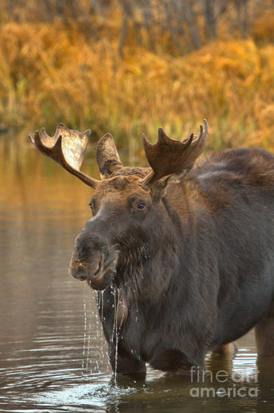 Drool Photograph - Drooling In The Teton Lunchroom by Adam Jewell