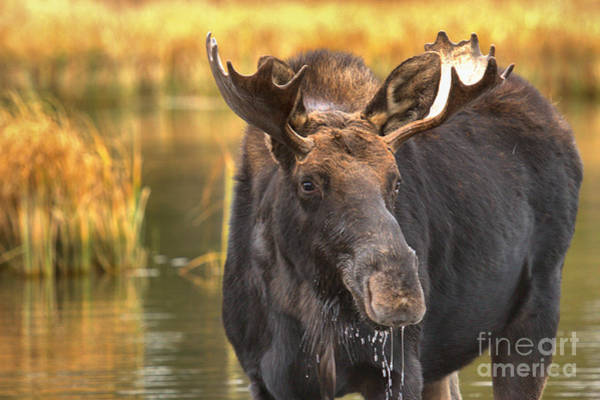 Drool Photograph - Drooling In The Wetlands by Adam Jewell