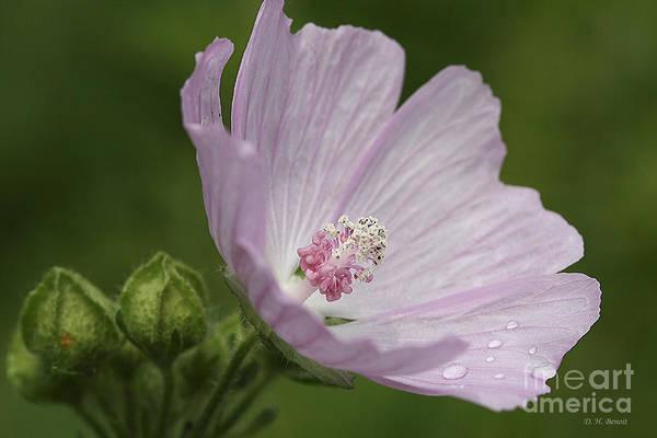 Photograph - Drops Of Dew by Deborah Benoit