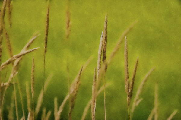 Photograph - Drowning In The Wheat by Andrea Kollo