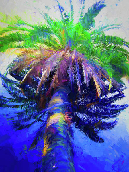 Photograph - Drowning Palm On The Loop by Alice Gipson