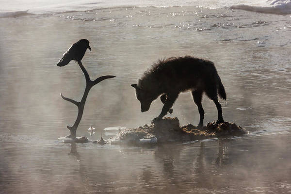 Photograph - Druid Wolf And Raven Silhouette by Mark Miller