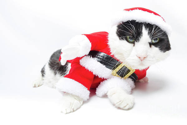 Photograph - drunk Santa Claus Cat by Benny Marty