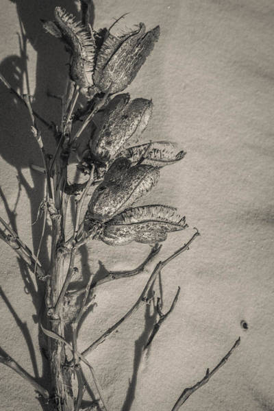 Photograph - Dry Desert by Racheal Christian