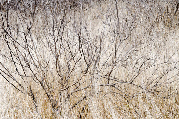 Photograph - Dry Grasses And Branches. by Rob Huntley