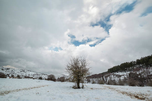 Photograph - Dry Tree In The Snow by Daniele Fanni