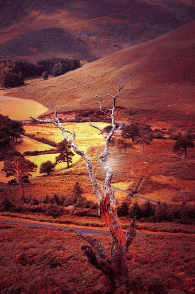 Photograph - Dry Tree. Wicklow Hills. Toned by Jenny Rainbow