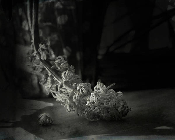 Wall Art - Photograph - Drying Blooms by Susan Capuano