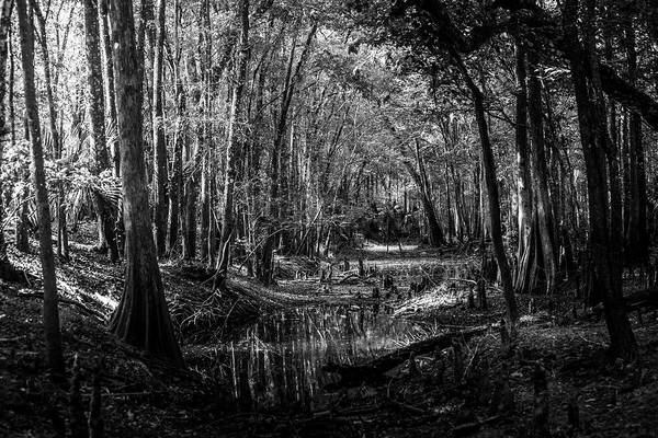Cypress Knees Photograph - Drying Creek Bed by Marvin Spates