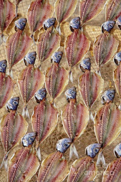 Ornamental Fish Photograph - Drying Fish On A Rack by Heiko Koehrer-Wagner